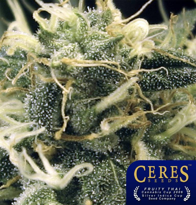 Fruity Thai (Ceres Seeds) - 5 fem.