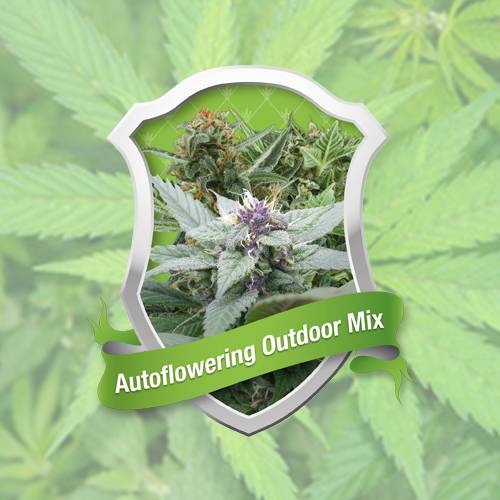 Autoflowering Outdoor Mix (Royal Queen Seeds) - 5 fem.