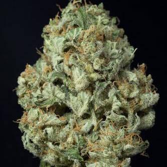 Dinamex Auto (Dinafem Seeds) - 5 fem.