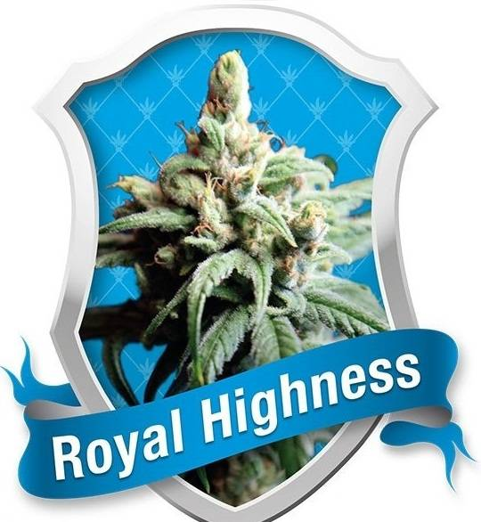 Royal Highness (Royal Queen Seeds) - 10 fem.