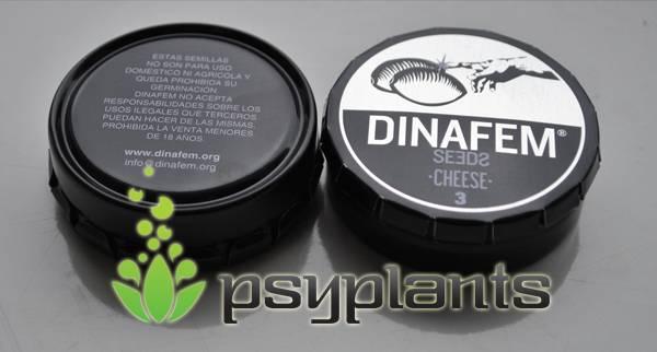 Cheese (Dinafem Seeds) - 3 fem.