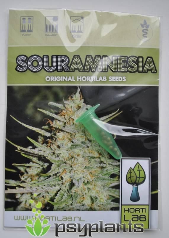 Sour Amnesia (Hortilab Seeds) - 9 reg.