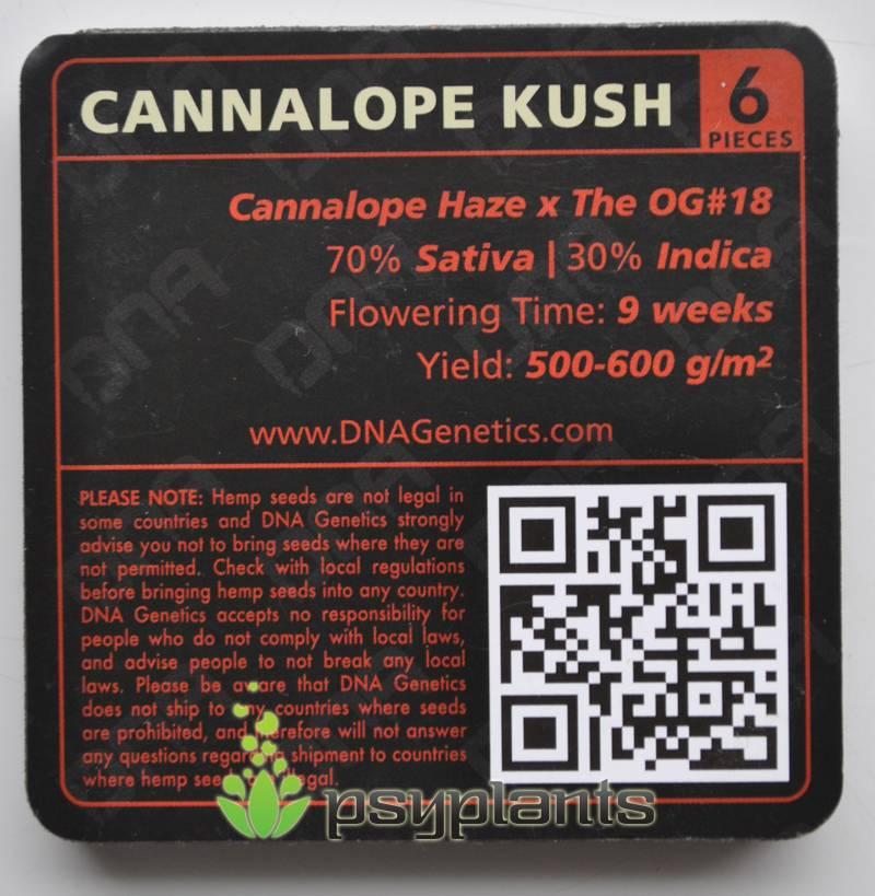Cannalope Kush (DNA Genetics) - 6 fem.