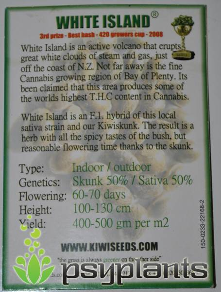 White Island  (Kiwiseeds) - 3 fem.