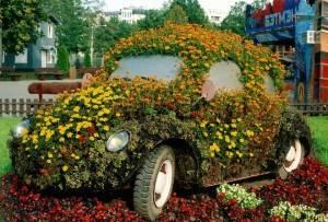 автоцветы