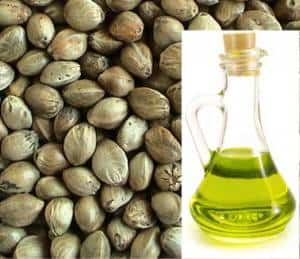 конпляное масло_масло конопляных семян