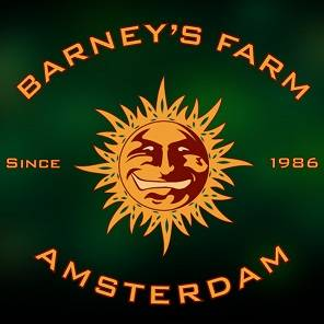 Barneys_Farm_Amsterdam