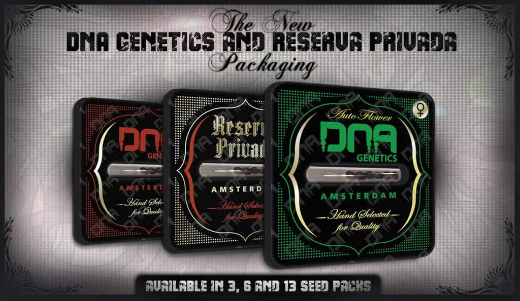 DNA-Genetics-Seeds-On-Sale-Here-1024x594