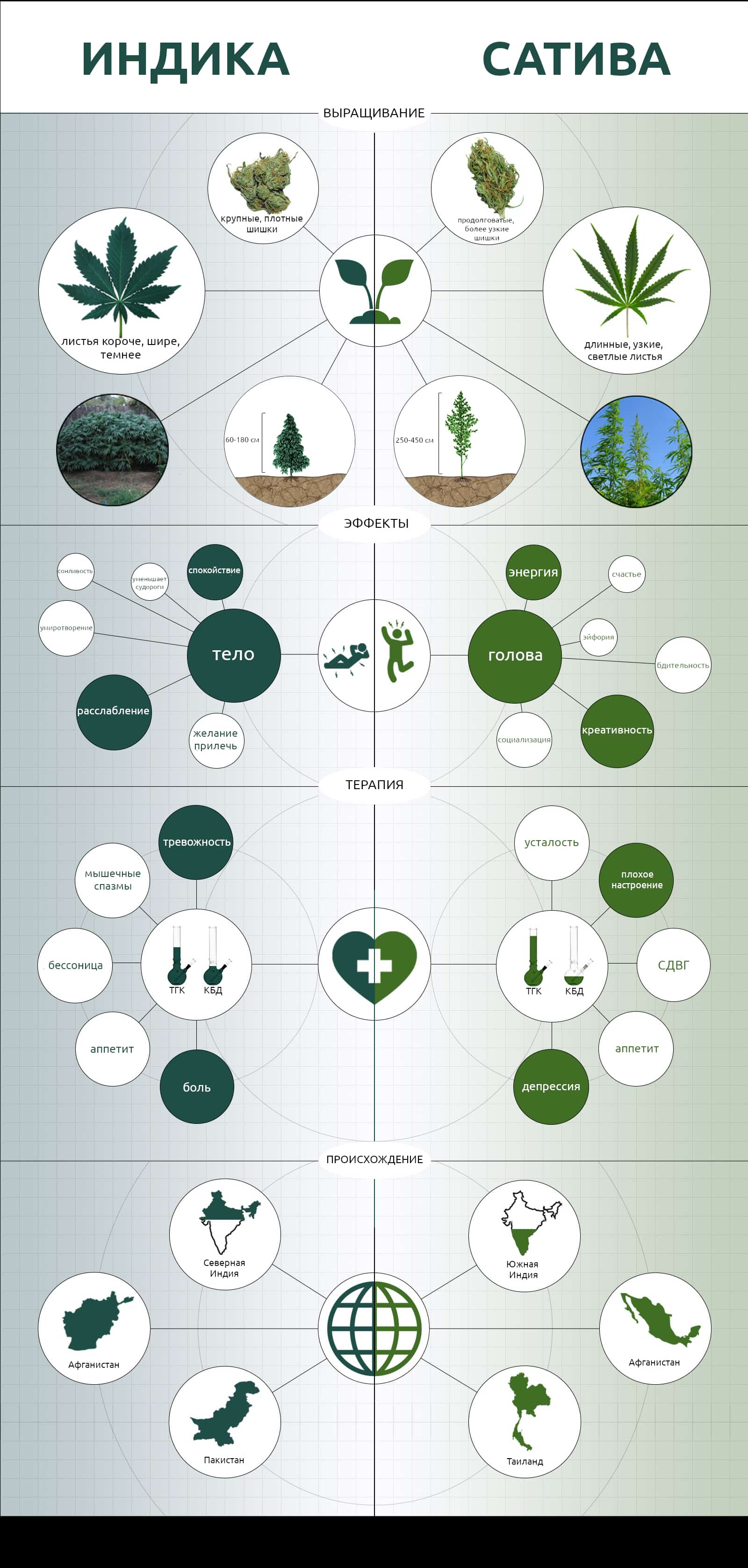 инфографика сатива индика