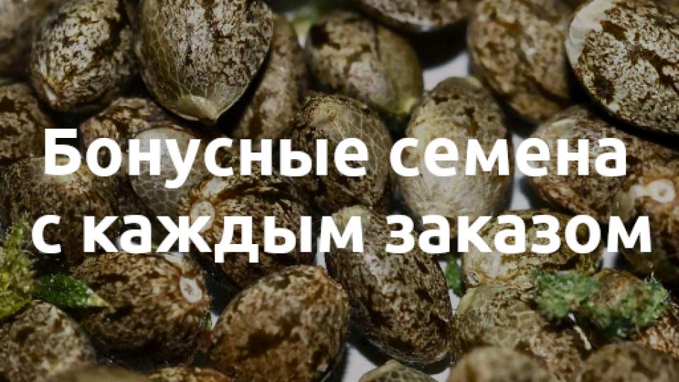 Семена конопли без обмана волокно конопли