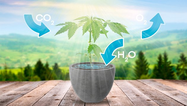 co2-o2-h20-cannabis