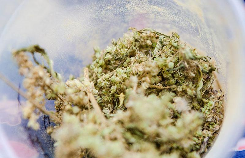 pilca-marijuana