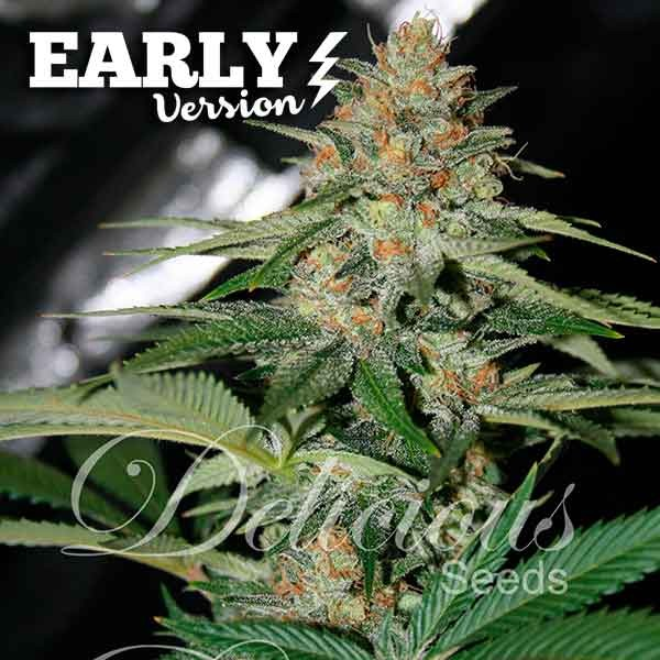 Delicious Candy Early Version (Delicious Seeds) - 3 fem
